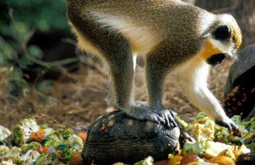 Wild life reserve monkey Turtle 1600x1200 5333909321 278001e237