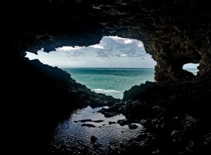 animal-flower-cave